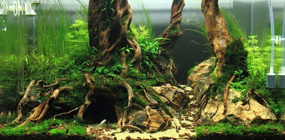 aquascape2